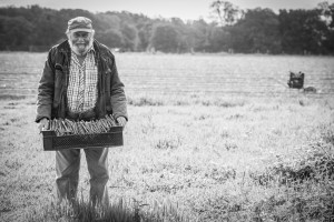 Asparagus farmer with his crop of aspragus in the sussex landscape